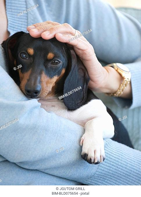 Close up of woman holding dachshund