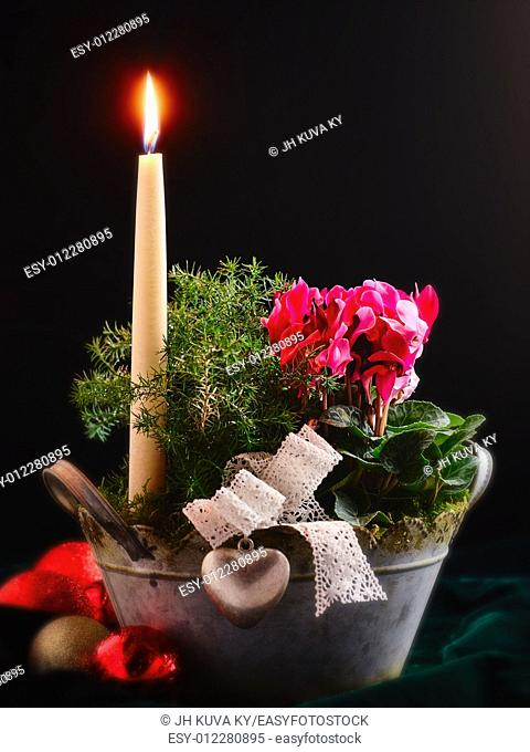 Still life, candle and flowers in a pot, christmas theme
