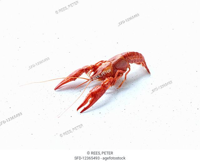 A cooked crayfish on a white background