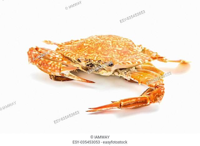 steam crab cooked in red, orange an white isolated on white background