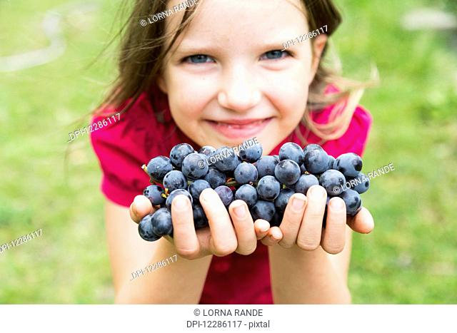 A girl with handfuls of grapes; Salmon Arm, British Columbia, Canada