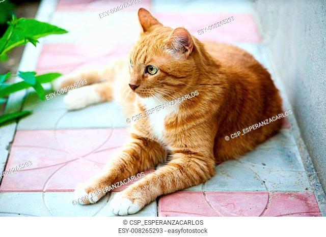 Beautiful big cat