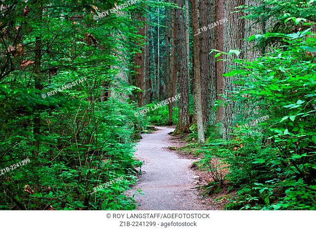 A walking trail through a dense temperate rain forest in Vancouver, Canada
