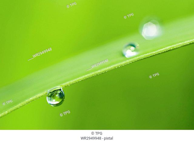 morning dew on fresh green Leaf. Nature background