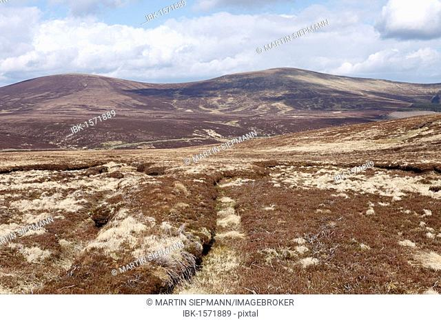 Moor in spring, National Park Wicklow Mountains, Republic of Ireland, British Isles, Europe