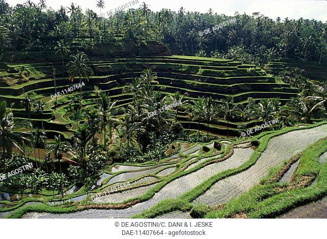 Rice terraces, Tegalalang, Ubud, Bali, Indonesia