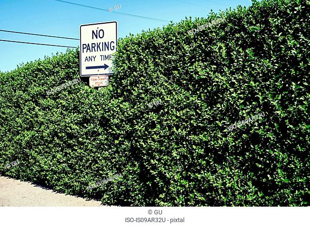 No parking sign with arrow pointing at hedge