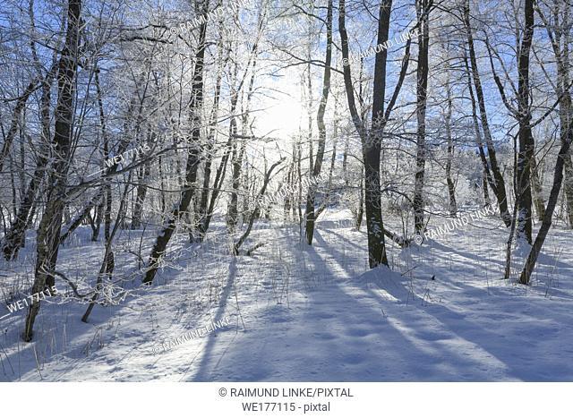 Winter landscape with sun near lake Barmsee, Krün, Garmisch-Partenkirchen Upper Bavaria, Bavaria, Germany, European Alps