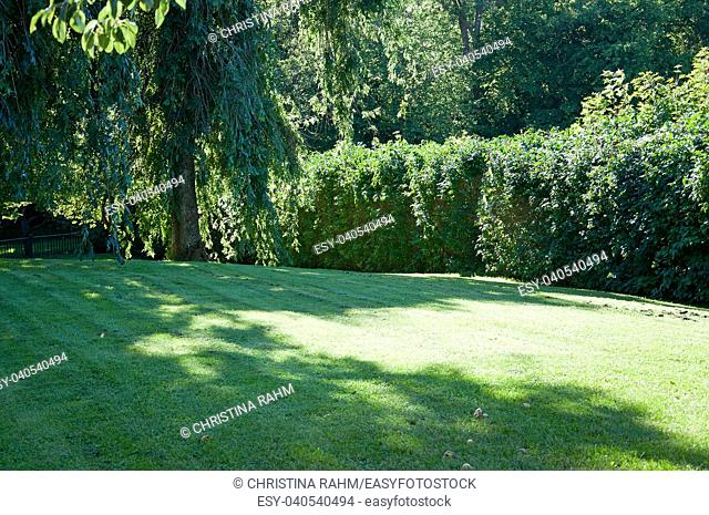 Fresh newly trimmed lawn surrounded by trees in a summer sunlit garden, Sweden