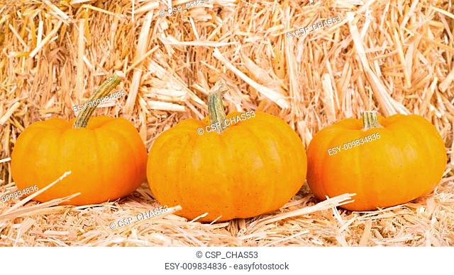 Gourds on a Straw Bale