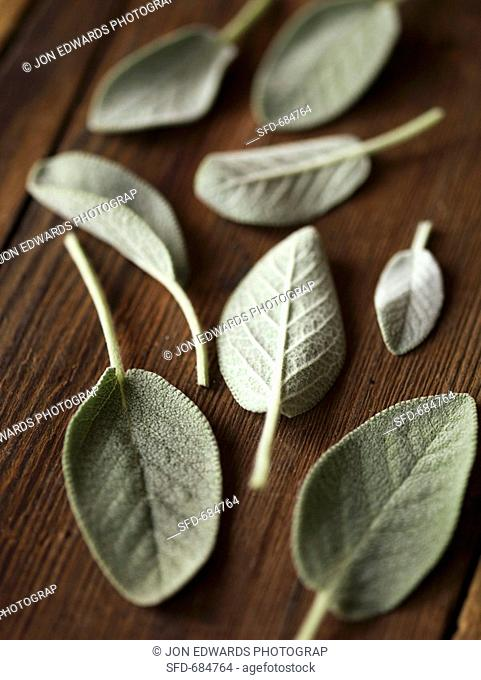 Sage Leaves on Wood