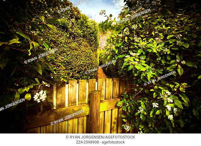 Green landscape photo of a fenced passageway through a Labyrinth. Wrong turn go back