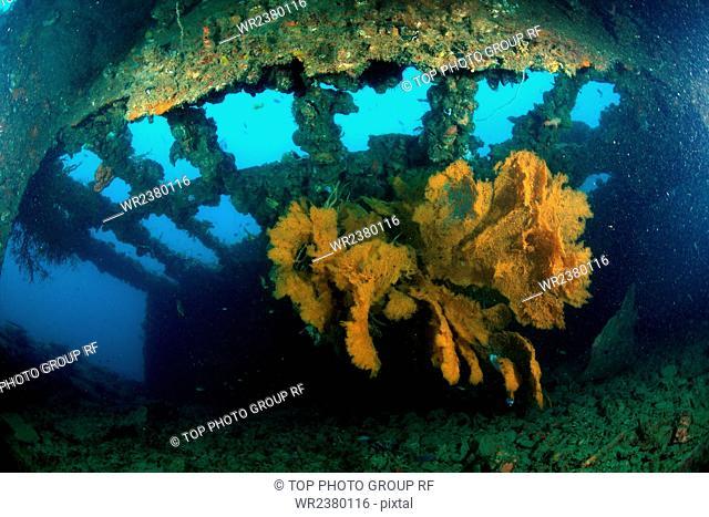 China Hainan province Sansha City Paracel Islands North Reef marine life