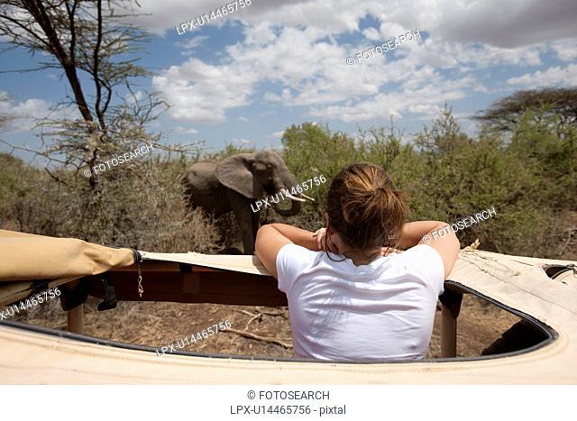 Girl in safari truck looking at elephant