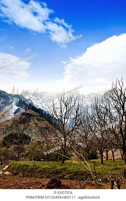 Trees on a hill, Manali, Himachal Pradesh, India
