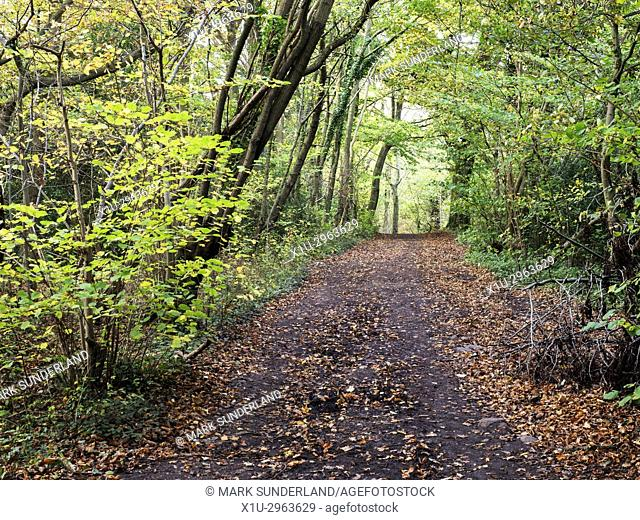 Path through Spring Wood in Autumn Nidd Gorge Woods near Knaresborough North Yorkshire England