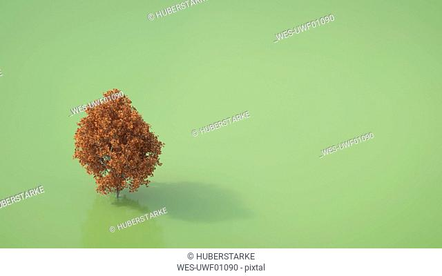 3D rendering, Autumnal maple tree on green backround