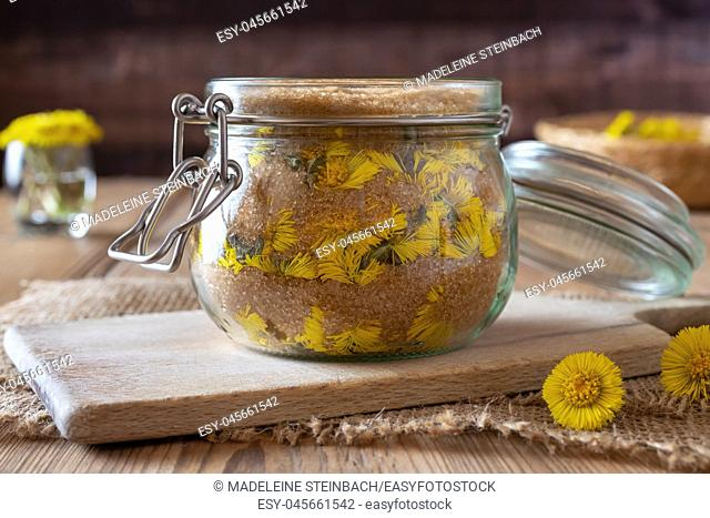 Glass jar filled with fresh coltsfoot flowers and cane sugar, to prepare homemade herbal syrup against cough