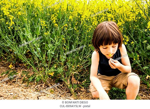 Boy crouching smelling yellow flower from field