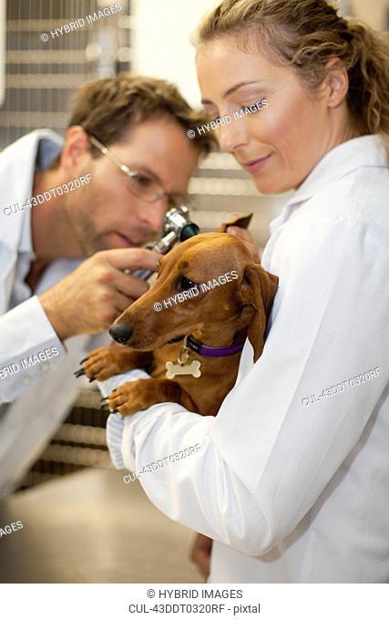 Veterinarians examining dog in kennel