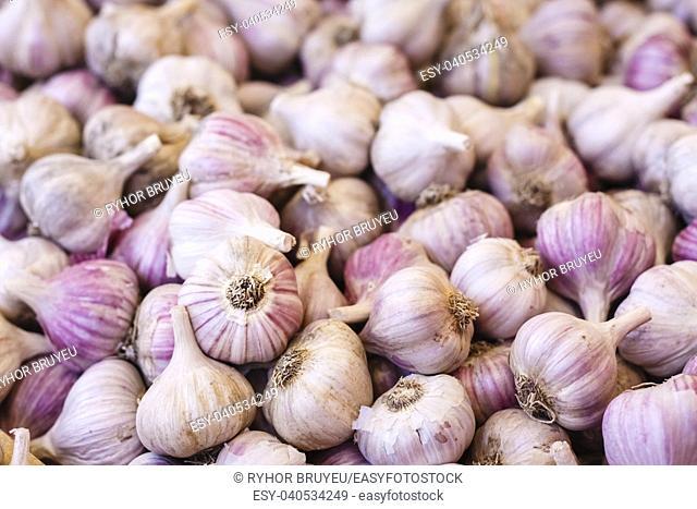 Garlic Pile On The Local Market. White Garlic Crop. Background