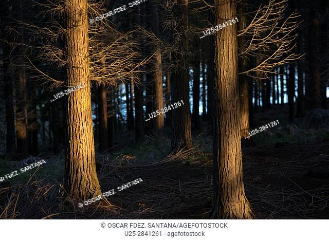Spain, Basque Country, Alava, Legutiano, forest