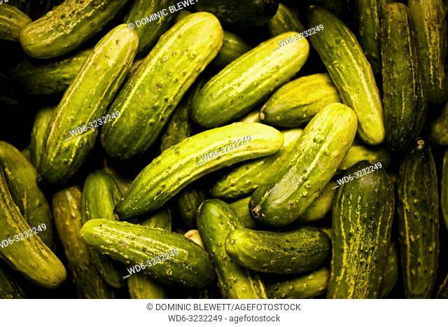 A pile of fresh cucumbers for sale at a market stall during the night at Long Bien Market in Hanoi, Vietnam