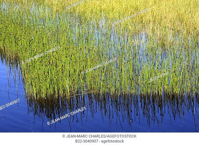 The pond of Bonnecombe, Les Salces, plateau de l'Aubrac, Lozère, Occitanie, France