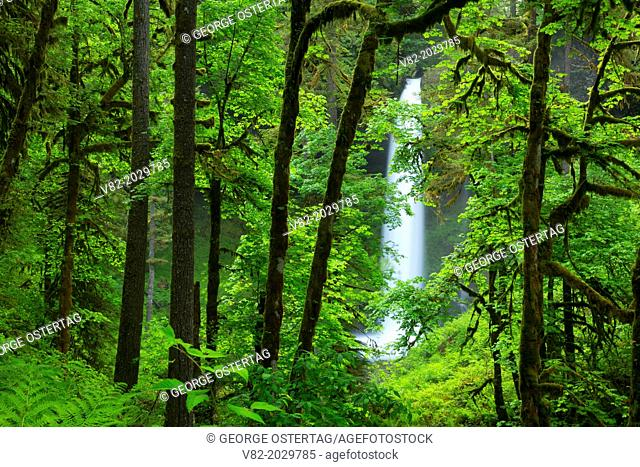 North Falls along Canyon Trail, Silver Falls State Park, Oregon