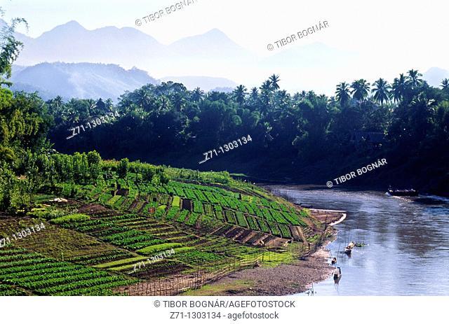 Laos, Luang Prabang, Khan river, vegetable gardens, landscape