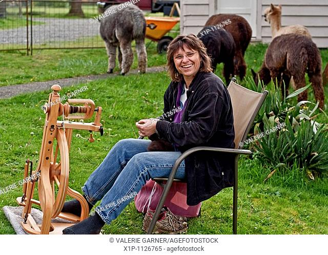 This rural lifestyle photo depicts a Caucasian woman enjoying farm life by spinning alpaca fiber into thread on a manual spinning wheel The alpacas are grazing...
