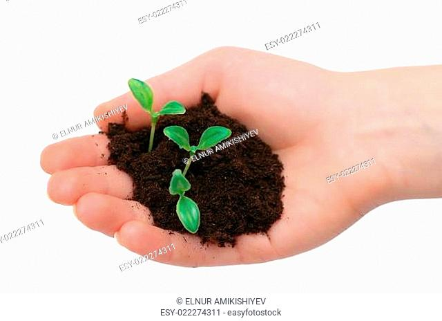 Hands holding seedling isolated on white background