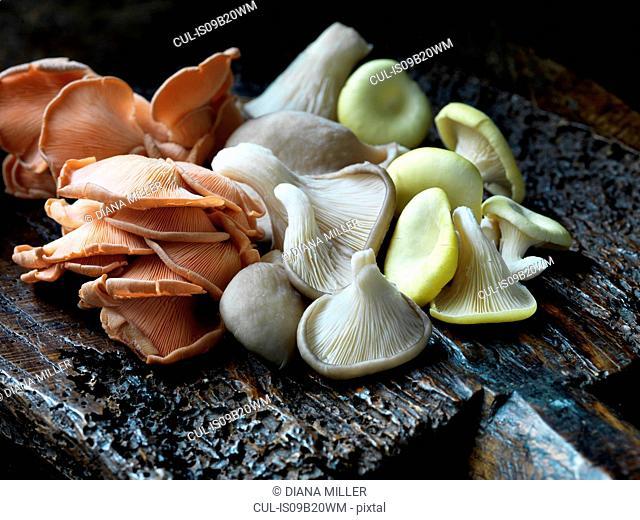 Fresh organic mixed oyster mushrooms