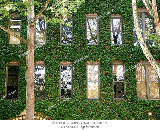 building, ivy covered