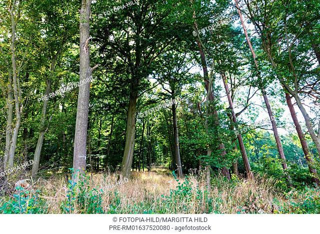 Small forest between Esebeck and Barterode, Flecken Adelebsen, Naturraum Sollingvorland, Landkreis Göttingen, Niedersachsen, Germany