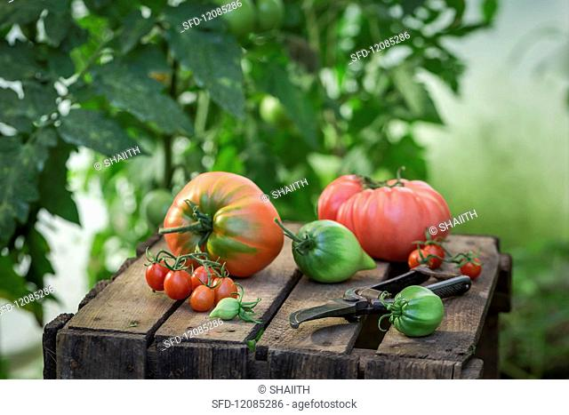 Assorted tomatoes on a wooden crate