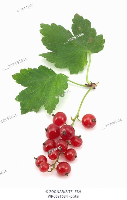 sprig of red currants with a leaf