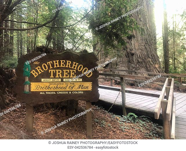 Klamath, CA - November 20, 2018: Brotherhood Tree is dedicated to the brotherhood of man in all races, creeds and colors at the Trees of Mystery park in the...