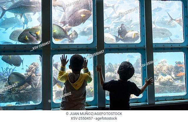 Kids fascinated with the seabed in the Great Barrier Reef. Queensland. Australia