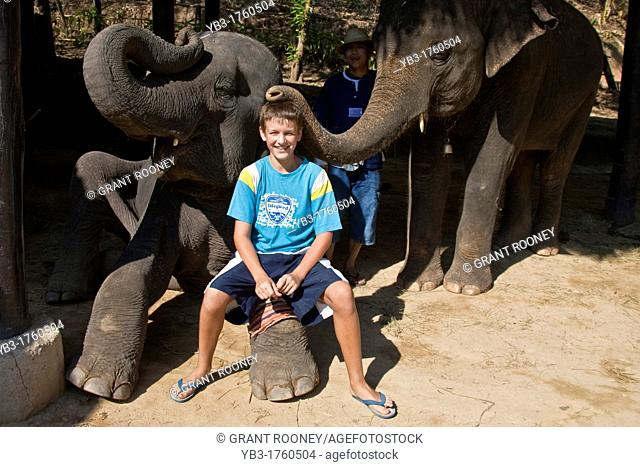 A Young Tourist with Elephant, Maesa Elephant Camp, Chiang Mai, Thailand