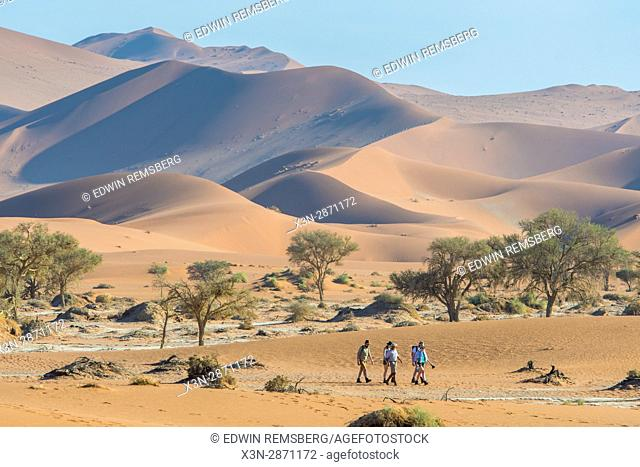 Tourists walking along ancient sand dunes and desert greenery in Namib-Naukluft National Park in Namibia, Africa. Etosha, Namibia