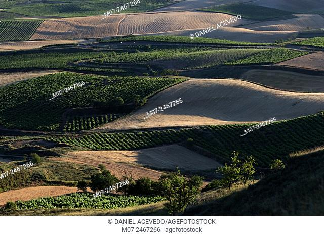 Vineyards and cereal fields, Rioja Alta landscape. Summer time