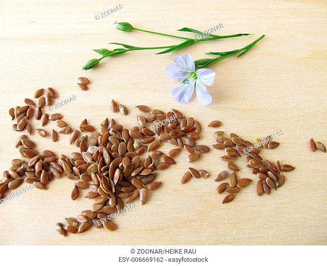 Linseed and blue flax flower