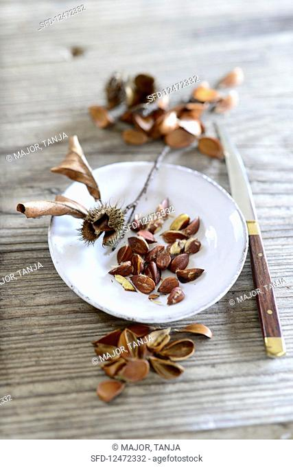 Beech nuts on a ceramic plate