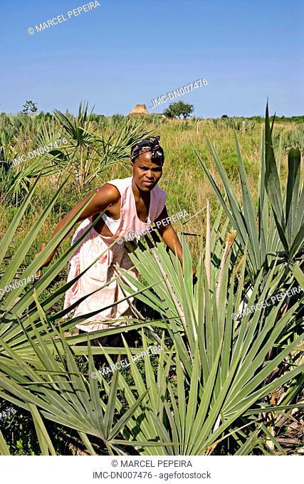 South Africa, KwaZulu-Natal, woman cutting palms