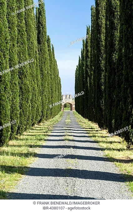Alleyway with green cypresses and a gate, Castiglione di Pescaia, Tuscany, Italy