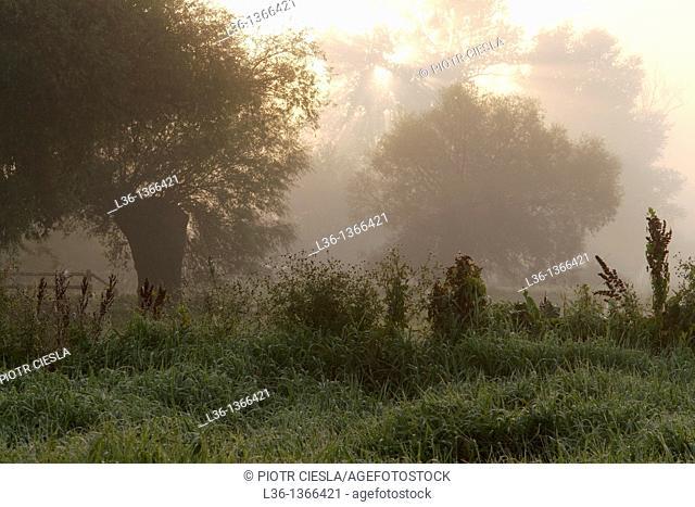 Misty morning near Drohiczyn Poland