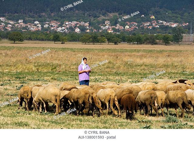 Bulgaria - North-West Region - Rhodope Mountains - Sheperd