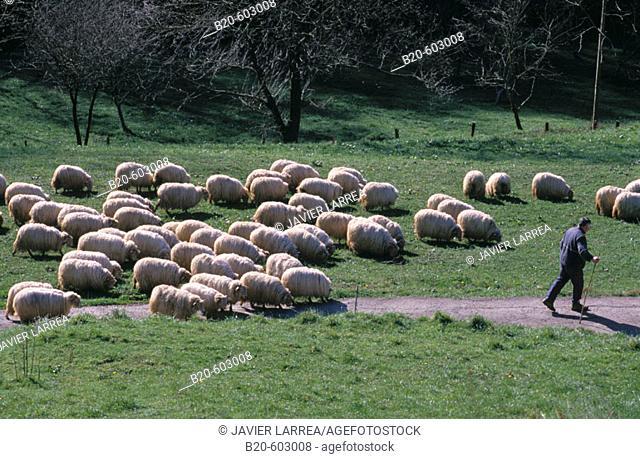 Gipuzkoa. Basque Country. Spain