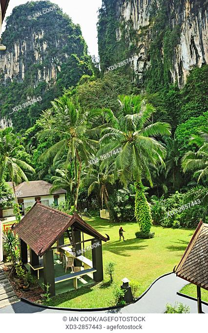 coconut palms, Cocos nucifera, in garden of P. N. Mountain Resort, Ao Luk, Krabi, Thailand